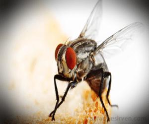 Foto de una mosca