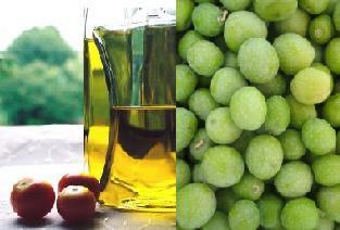 Presentaciones del aceite y el olivo