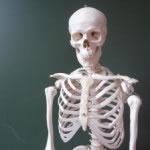 Esqueleto humano, formado con huesos