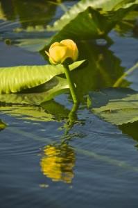 Agua y planta en lago