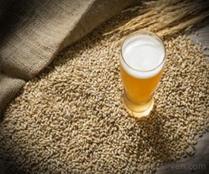 La levadura Saccaromyces cerevisiae fermenta los azúcares de la cebada para producir el alcohol de la cerveza