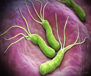 La claritromicina es un fármaco efectivo contra la Helicobacter pylori y más bacterias.